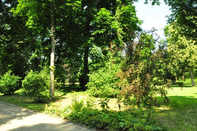 Juli 2021 ... Sommerwetter im Schlosspark Neckarhausen ... Brigitte Stolle