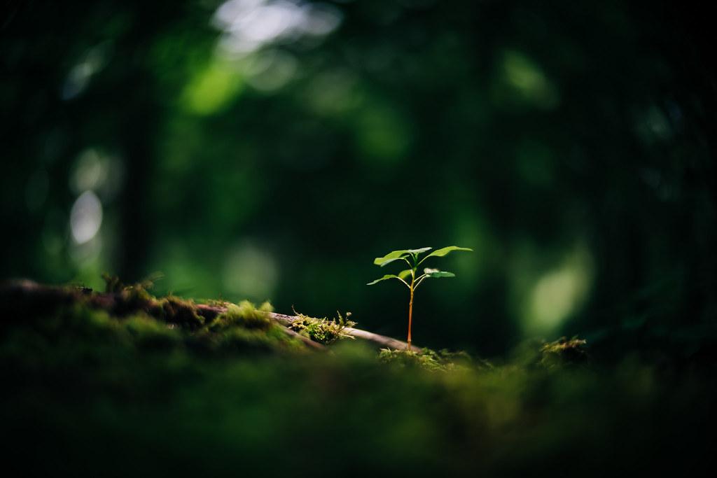 Smallest tree