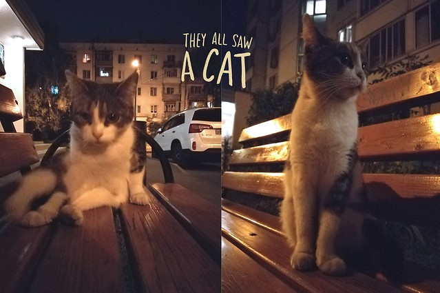 Night and cat