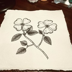 Sunday Funday! Whipped this dogwood practice piece out before we left for McKinney today #khadipaper #micronpen #dogwood