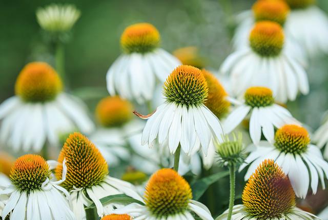 Blüten Schönheit
