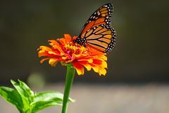 Monarchu2026