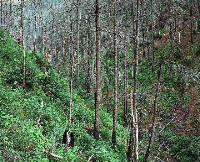 Oneonta Gorge, post Eagle Creek Fire