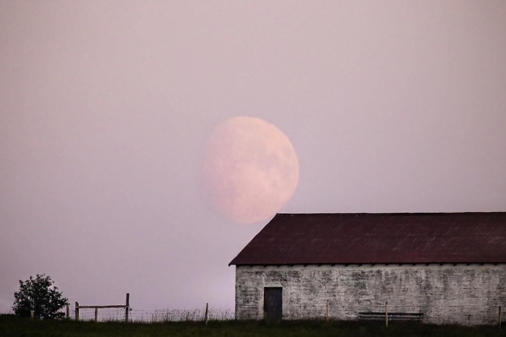 Strawberry moon rising