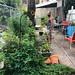 Nature is healing and running the backyard