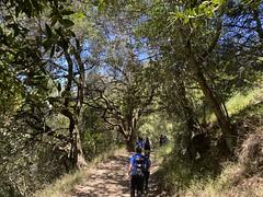 Sequoia Bay View Trail - Patrol Hike - Eagles & Dinos