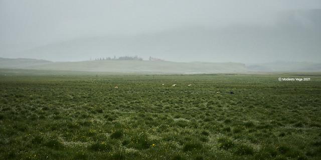 Grazing on a field/Pastando en un campo