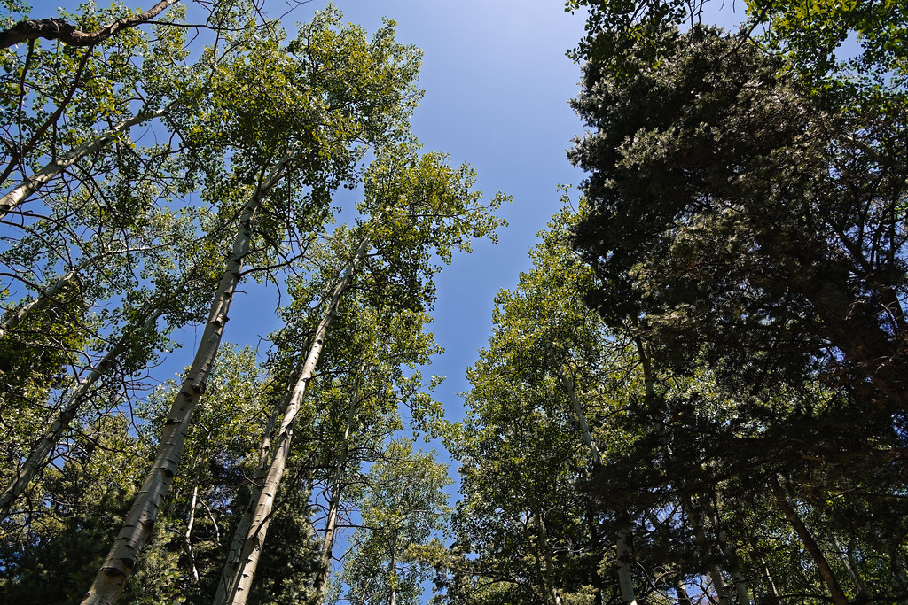 Few Things Can Satisfy the Soul and Mind Like Being Amongst the Tall Trees! (Great Sand Dunes National Park & Preserve)