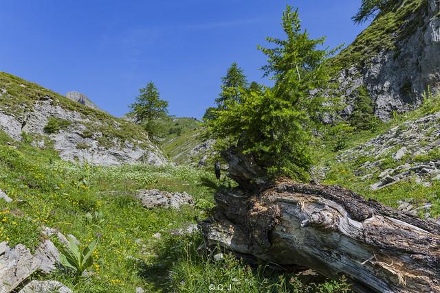 En avant pour une nouvelle aventure ! Let's go to a new adventure in the Alps !