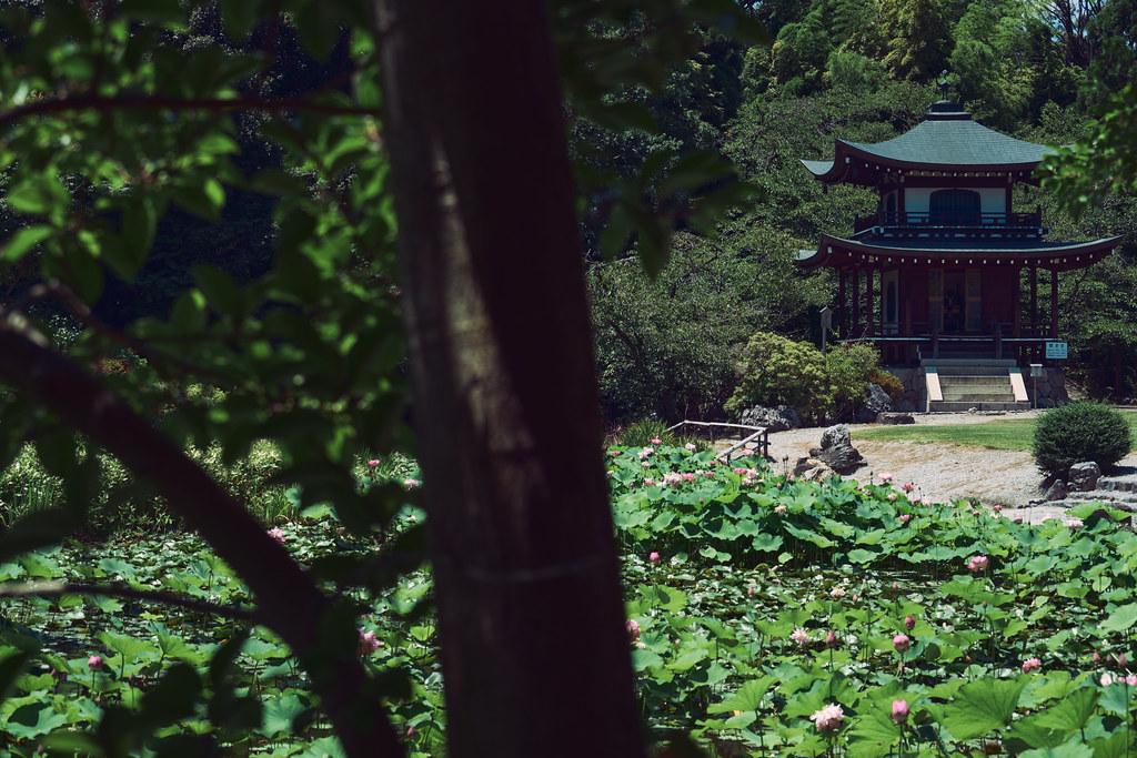 Kyoto Kajuji Temple in Summer