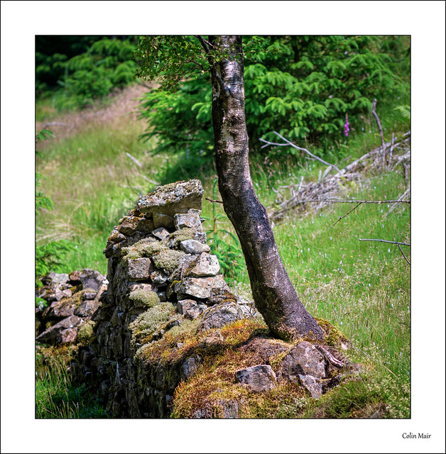 Tree and Wall 2 - (Jupiter 37A, 135mm, f4) - 2021-07-02nd
