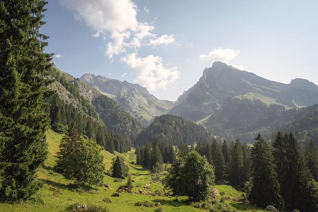 Säntis mit Wald