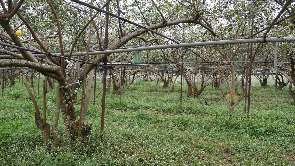 20210726反對政治力介入橋科環評記者會。中崎有機農場。照片提供:地球公民基金會
