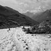 letzter Schnee am Scalettapass (GR)