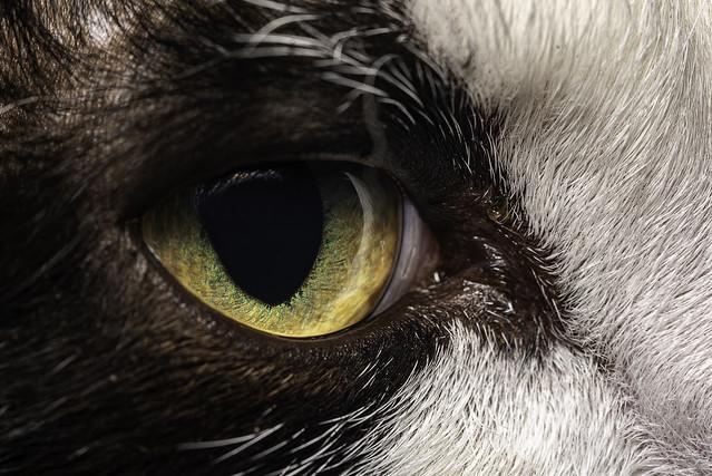 The hunters eye