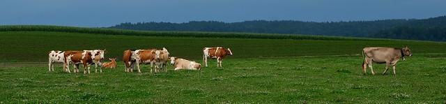 Landwirtschaft in Oberglatt