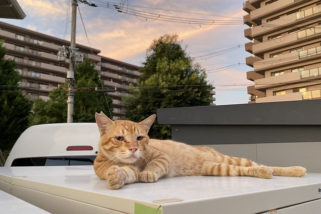 Today's Cat@2021−07−26