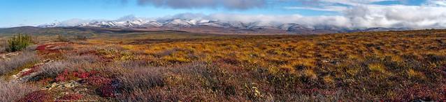 The Tundra at the Arctic Circle - Richardson Mountains