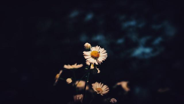 Gänseblümchen…