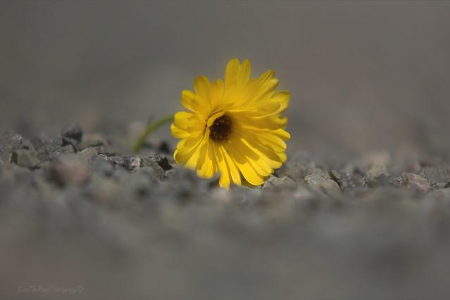 Stone Flower 🌼