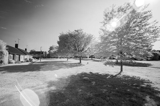 Summer sun (infrared)