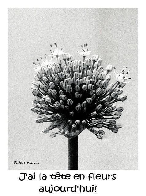 La tête en fleurs ... (Argentique) / I've got flowers in my head... (Film)
