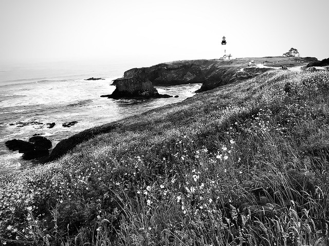 Lighthouse Floral Noir