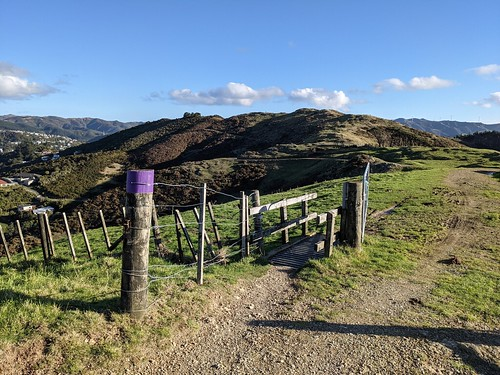 <p>A cattle stop and gate along the Skyline track ridge above Karori near Johnston's Hill.</p>