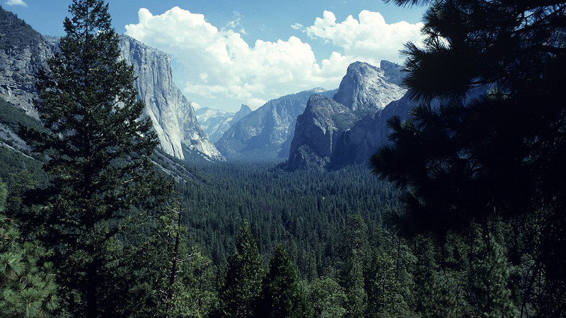 A mountain behind a wooded area.