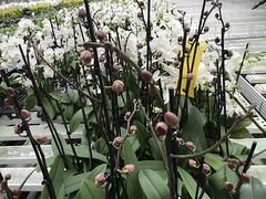 22.7.21. Meyer Orchideen AG