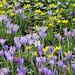 2020-02-24 Spring in Botanic Garden