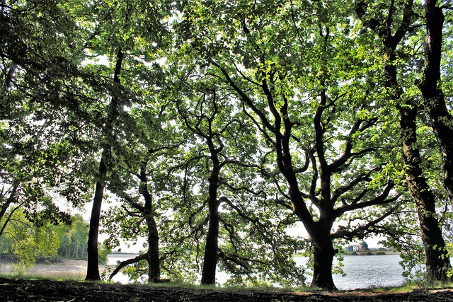 Under The Green Of The Trees ( poetic 'soft sweet breeze' version)