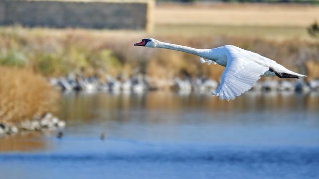 Crossing Las Gallinas ponds