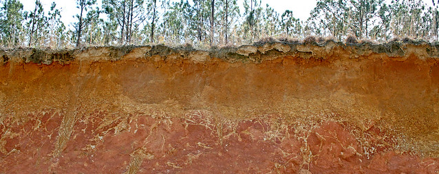 Plinthic soil over the