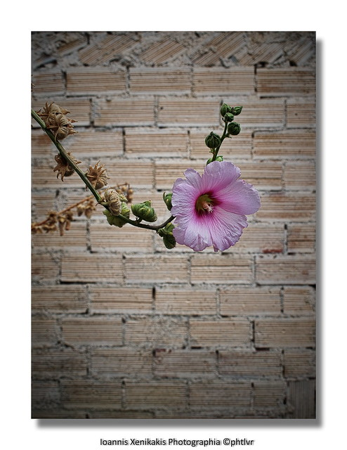 flower on the wall...