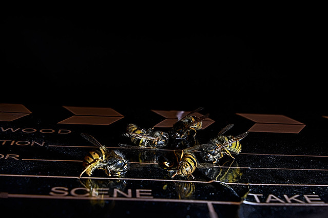 Wasps acting in Bee-movie, bee-actors union furious ......