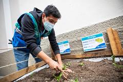 MML recupera espacios públicos en Pasaje Ruiz y jirón Zubiaga en Barrios Altos 012