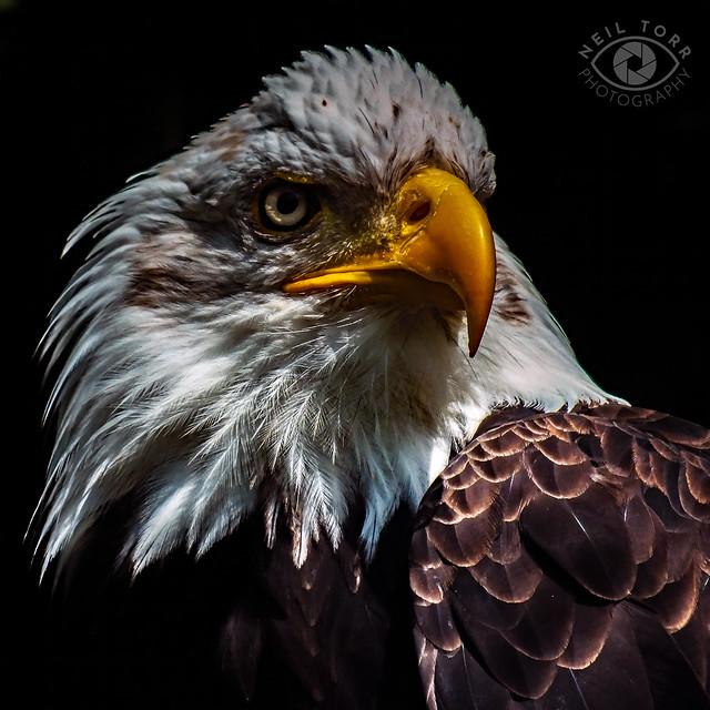 Raptor Photography Day 184 copy