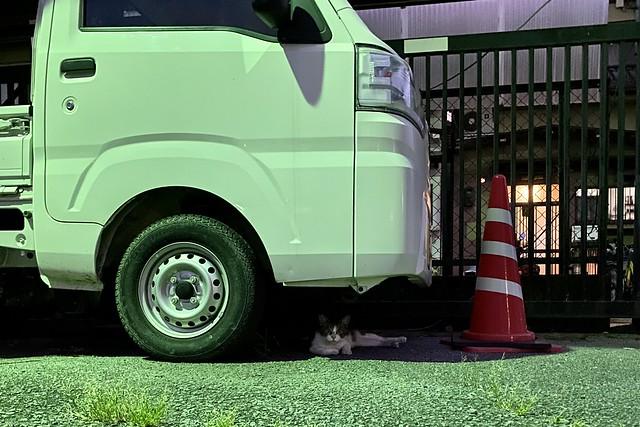 Today's Cat@2021−07−27