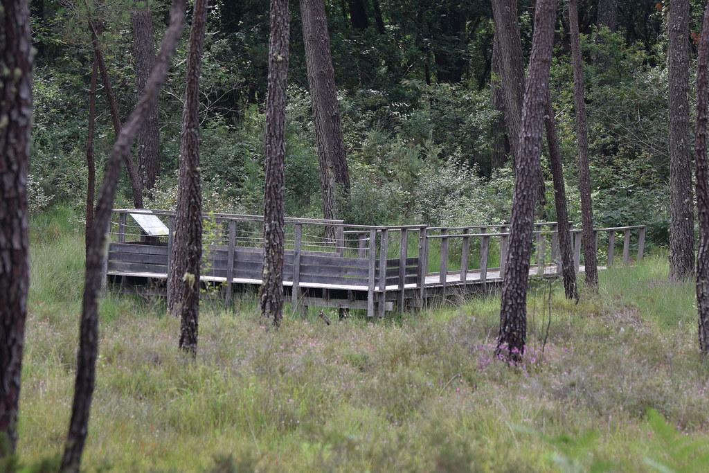 Tourbière de la réseve naturelle de Mées (11)