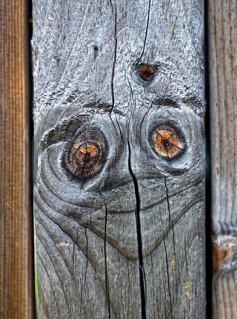 Le Visage - The face in the wood