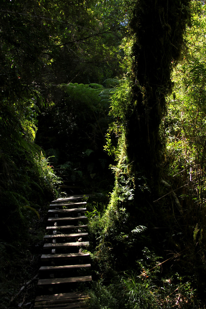 Parque Nacional Pumalín Douglas Tompkins. Región de los Lagos, Sur de Chile.