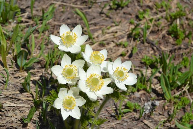 Pisqua Flowers by Jim