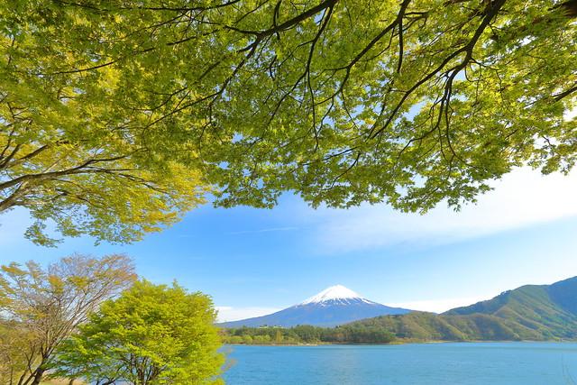 Green and mount Fuji