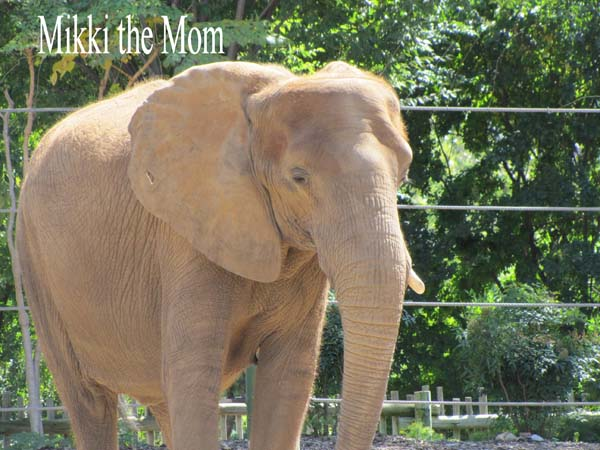 Mikki the mom