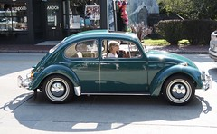 Not a pug in this bug