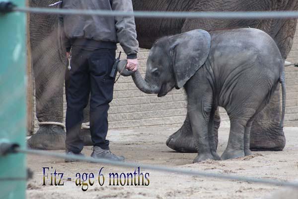 Fitz 6 months