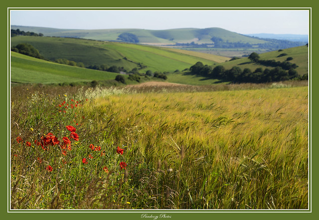 South Downs National Park, East Sussex, England, Uk.