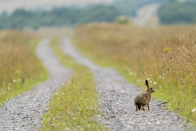 Hare and the Road