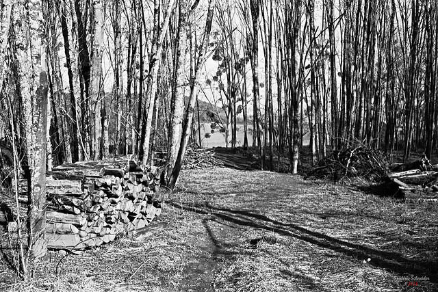 Cross Forest